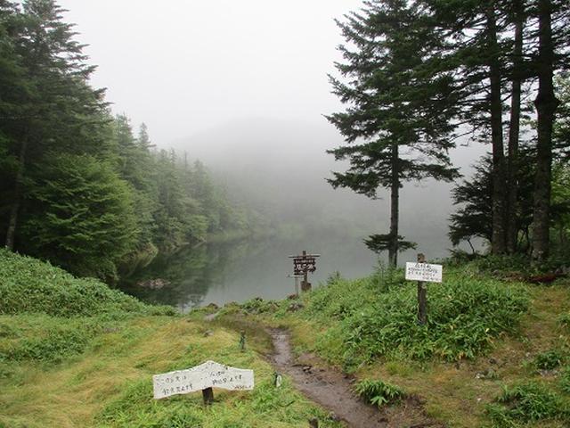 画像7: 【山旅会・登山ガイドこだわりツアー】岡田ガイドからの便り・双子池から亀甲池ツアーの下見にいってまいりました!