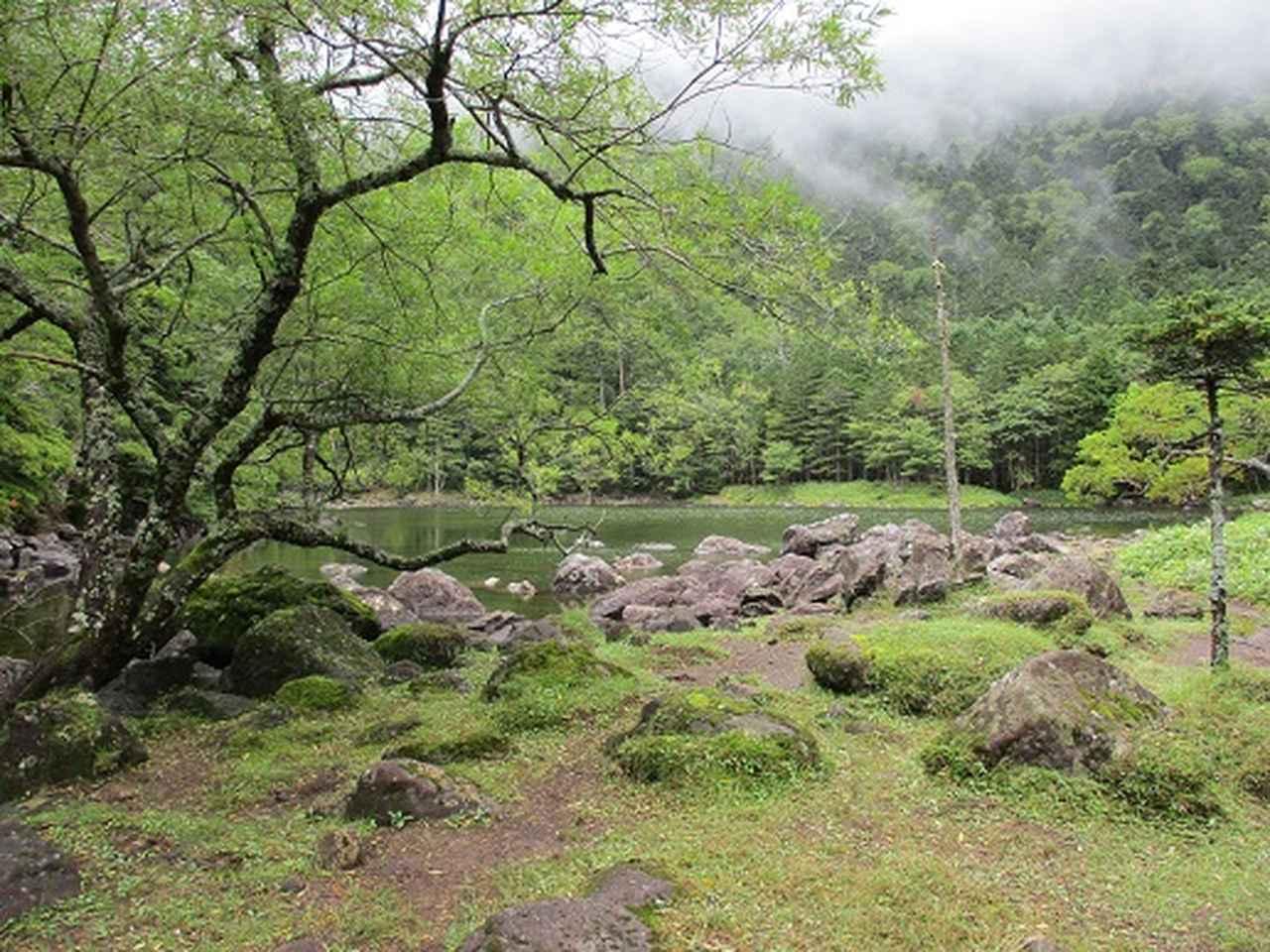 画像11: 【山旅会・登山ガイドこだわりツアー】岡田ガイドからの便り・双子池から亀甲池ツアーの下見にいってまいりました!