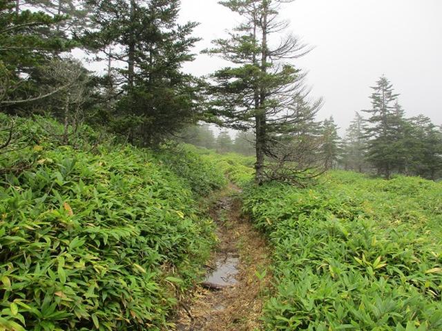 画像12: 【山旅会・登山ガイドこだわりツアー】岡田ガイドからの便り・双子池から亀甲池ツアーの下見にいってまいりました!