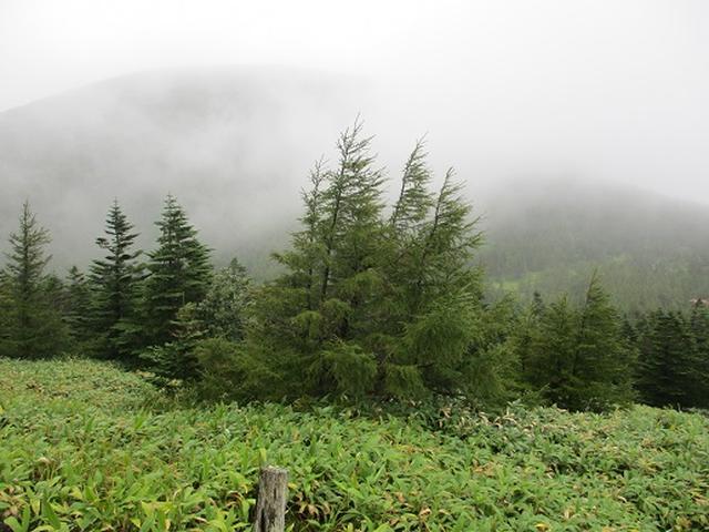 画像3: 【山旅会・登山ガイドこだわりツアー】岡田ガイドからの便り・双子池から亀甲池ツアーの下見にいってまいりました!