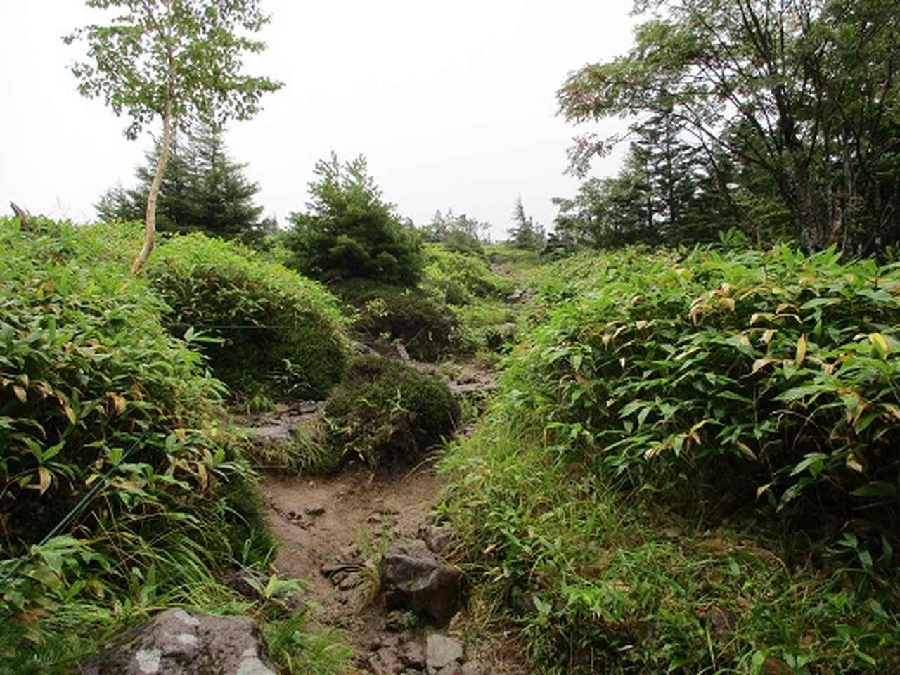 画像2: 【山旅会・登山ガイドこだわりツアー】岡田ガイドからの便り・双子池から亀甲池ツアーの下見にいってまいりました!