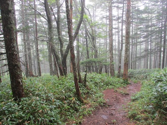 画像6: 【山旅会・登山ガイドこだわりツアー】岡田ガイドからの便り・双子池から亀甲池ツアーの下見にいってまいりました!