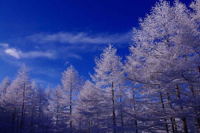 画像: ■霧氷(写真は美ヶ原)