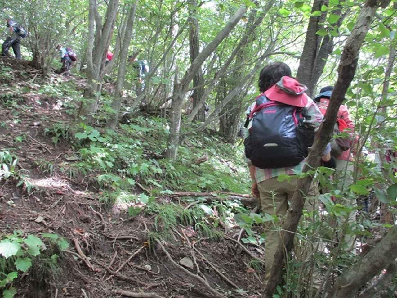 画像6: 【山旅会・登山ガイドこだわりツアー】岡田ガイドからの便り・浅間隠山ツアーにいってまいりました!
