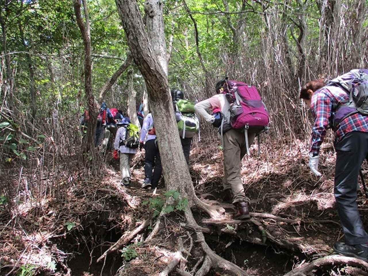 画像5: 【山旅会・登山ガイドこだわりツアー】岡田ガイドからの便り・浅間隠山ツアーにいってまいりました!