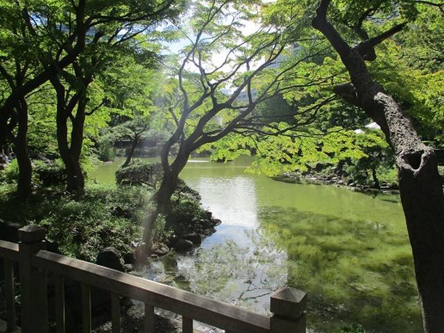 画像3: 【山旅会・登山ガイドこだわりツアー】岡田ガイドからの便り・都内の山を下見してまいりました!