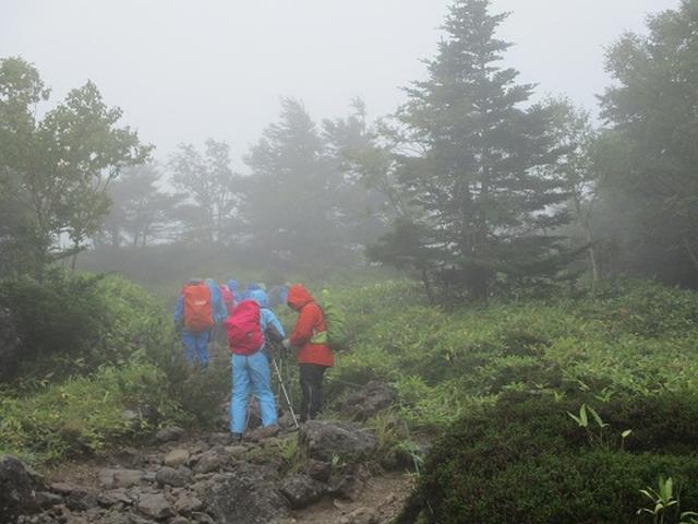 画像2: 【山旅会・登山ガイドこだわりツアー】岡田ガイドからの便り・双子池から亀甲池ツアーにいってまいりました!