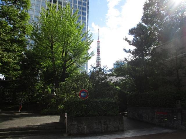 画像7: 【山旅会・登山ガイドこだわりツアー】岡田ガイドからの便り・都内の山を下見してまいりました!