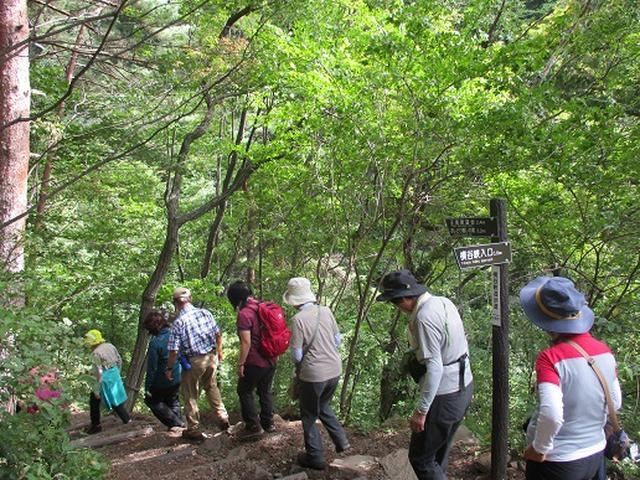画像7: 【山旅会・登山ガイドこだわりツアー】岡田ガイドからの便り・双子池から亀甲池ツアーにいってまいりました!