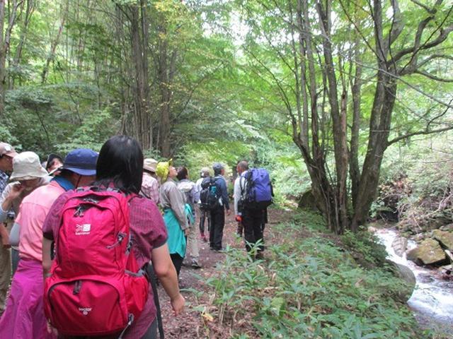 画像8: 【山旅会・登山ガイドこだわりツアー】岡田ガイドからの便り・双子池から亀甲池ツアーにいってまいりました!