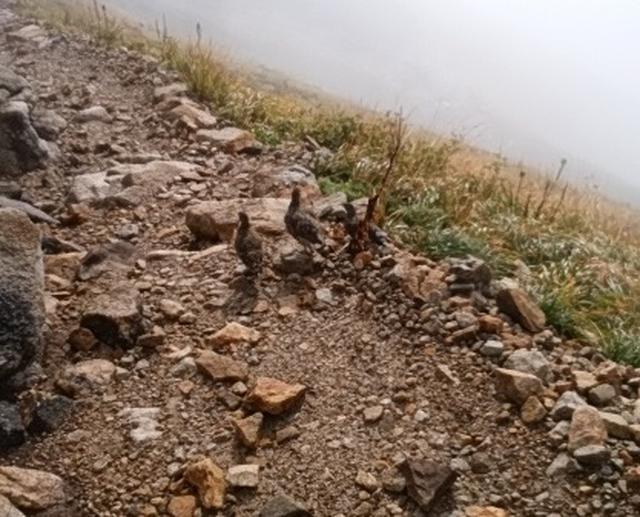 画像7: 【山旅会・登山ガイドこだわりツアー】岡田ガイドからの便り・唐松岳ツアーの2回目にいってまいりました!(その2)