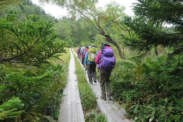 画像2: 【山旅会・登山ガイドこだわりツアー】岡田ガイドからの便り・尾瀬上田代にいってまいりました!