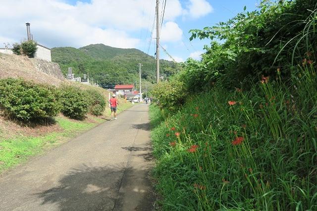 画像2: 【山旅会・登山ガイドこだわりツアー】岡田ガイドからの便り・巾着田から日和田山に下見にいってまいりました!