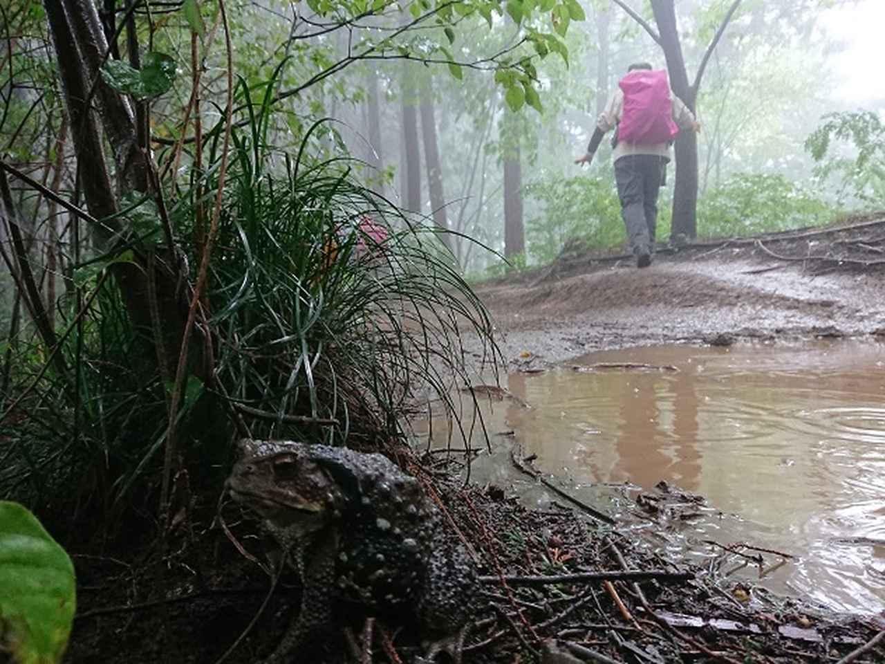 画像9: 【山旅会・登山ガイドこだわりツアー】添乗員からの便り・城山から景信山ツアーにいってまいりました!