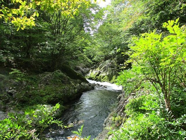 画像9: 【山旅会・登山ガイドこだわりツアー】岡田ガイドからの便り・白神山地・二ツ森に下見にいってまいりました!