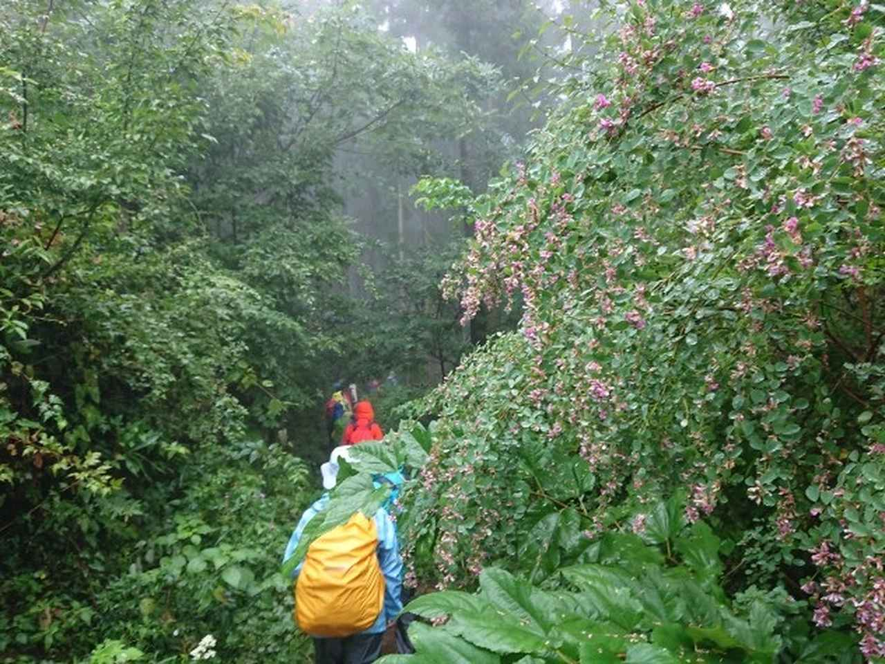 画像5: 【山旅会・登山ガイドこだわりツアー】添乗員からの便り・城山から景信山ツアーにいってまいりました!