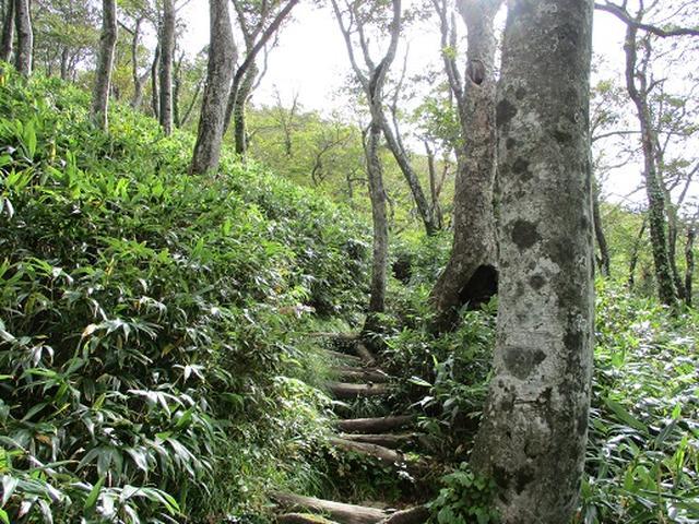 画像6: 【山旅会・登山ガイドこだわりツアー】岡田ガイドからの便り・白神山地・二ツ森に下見にいってまいりました!