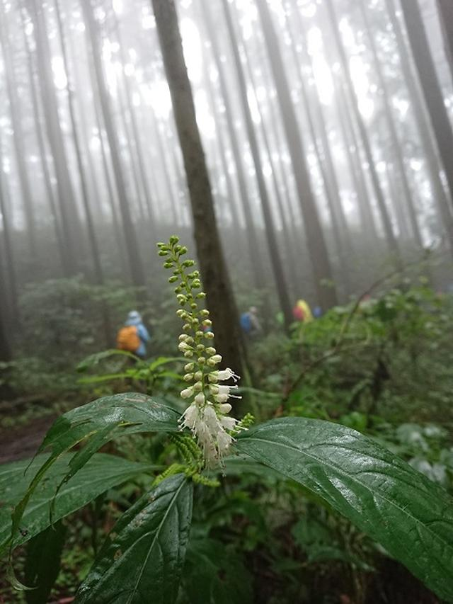 画像6: 【山旅会・登山ガイドこだわりツアー】添乗員からの便り・城山から景信山ツアーにいってまいりました!