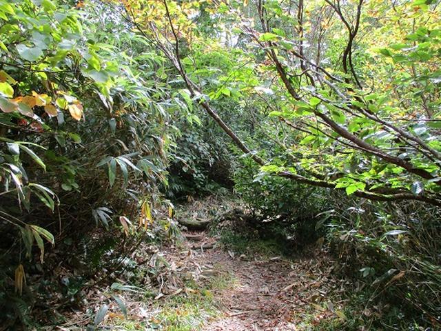 画像2: 【山旅会・登山ガイドこだわりツアー】岡田ガイドからの便り・白神山地・二ツ森に下見にいってまいりました!