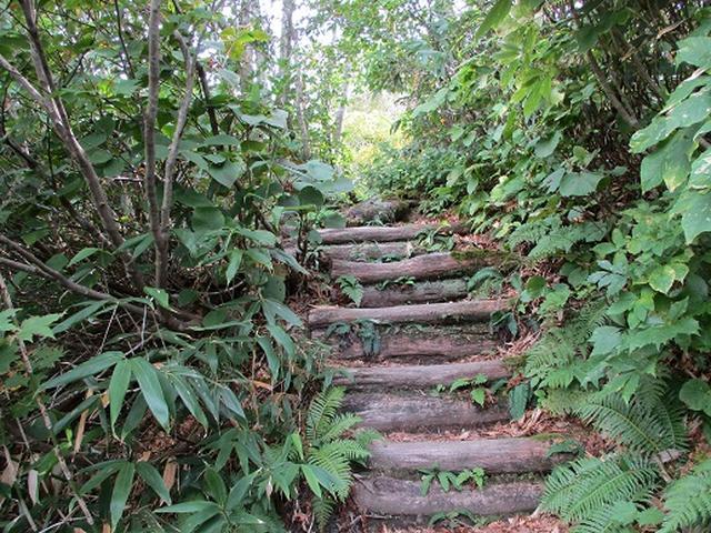 画像4: 【山旅会・登山ガイドこだわりツアー】岡田ガイドからの便り・白神山地・二ツ森に下見にいってまいりました!