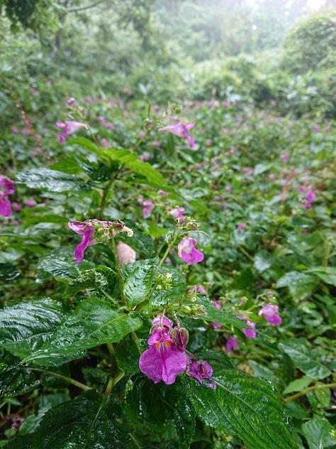 画像7: 【山旅会・登山ガイドこだわりツアー】添乗員からの便り・城山から景信山ツアーにいってまいりました!