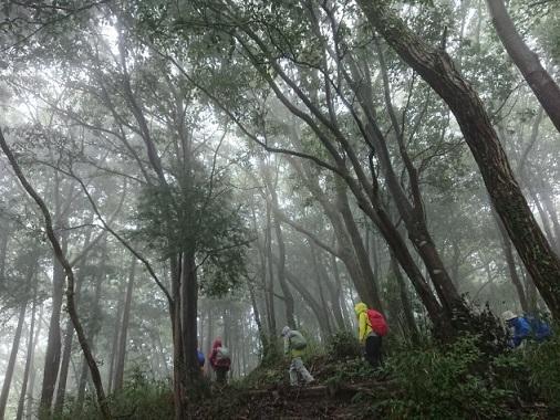 画像1: 【山旅会・登山ガイドこだわりツアー】添乗員からの便り・城山から景信山ツアーにいってまいりました!