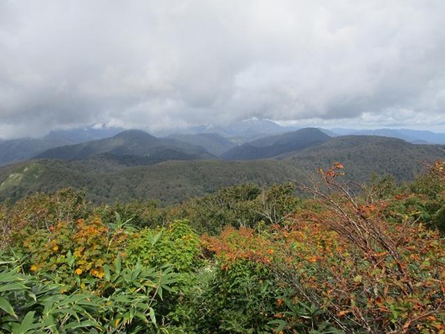 画像8: 【山旅会・登山ガイドこだわりツアー】岡田ガイドからの便り・白神山地・二ツ森に下見にいってまいりました!