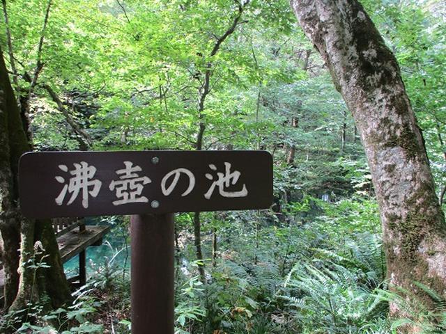 画像5: 【山旅会・登山ガイドこだわりツアー】岡田ガイドからの便り・白神山地 十二湖に下見にいってまいりました!