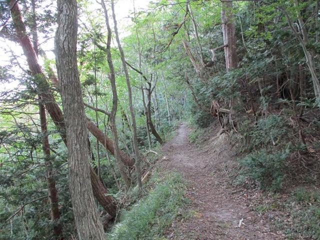画像8: 【山旅会・登山ガイドこだわりツアー】岡田ガイドからの便り・白神山地 十二湖に下見にいってまいりました!