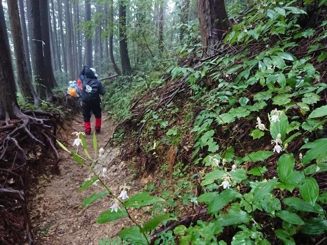 画像12: 【山旅会・登山ガイドこだわりツアー】添乗員からの便り・城山から景信山ツアーにいってまいりました!