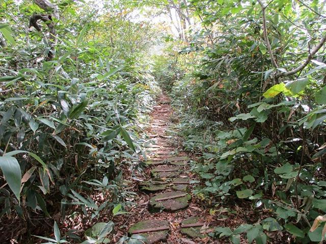 画像3: 【山旅会・登山ガイドこだわりツアー】岡田ガイドからの便り・白神山地・二ツ森に下見にいってまいりました!