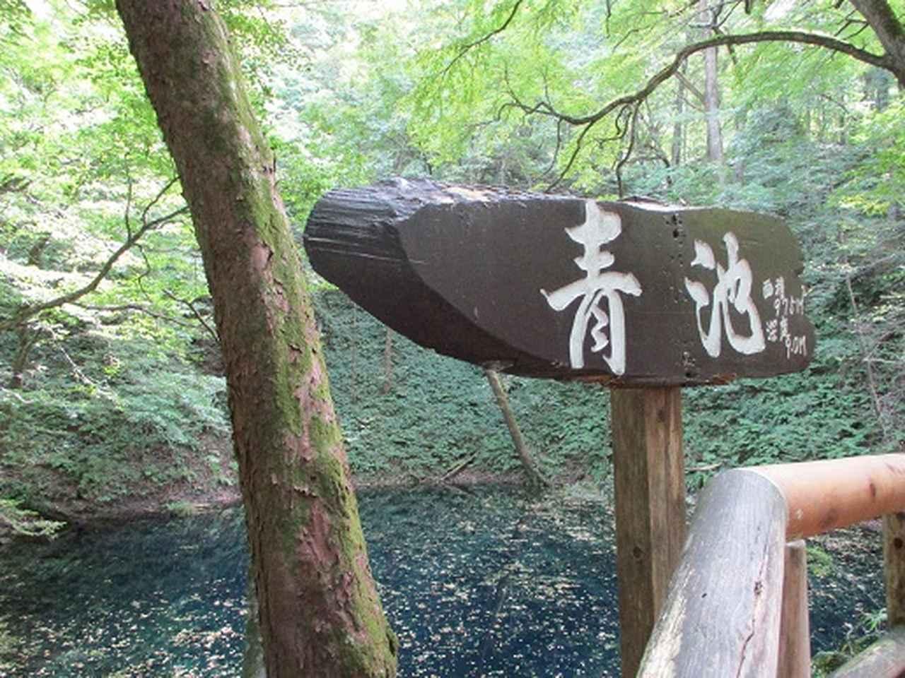 画像3: 【山旅会・登山ガイドこだわりツアー】岡田ガイドからの便り・白神山地 十二湖に下見にいってまいりました!
