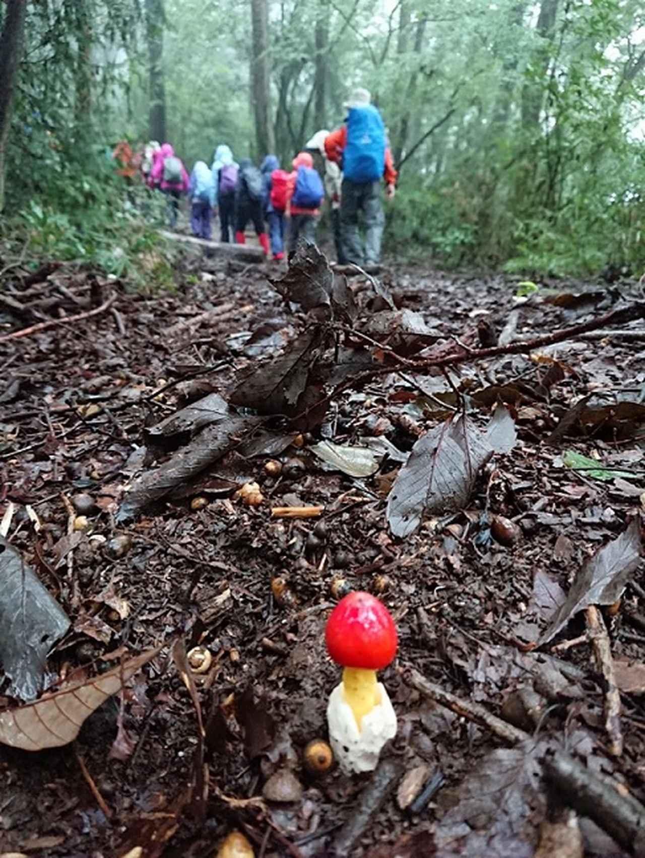 画像2: 【山旅会・登山ガイドこだわりツアー】添乗員からの便り・城山から景信山ツアーにいってまいりました!