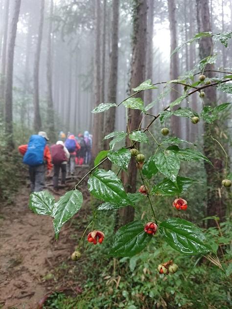 画像3: 【山旅会・登山ガイドこだわりツアー】添乗員からの便り・城山から景信山ツアーにいってまいりました!