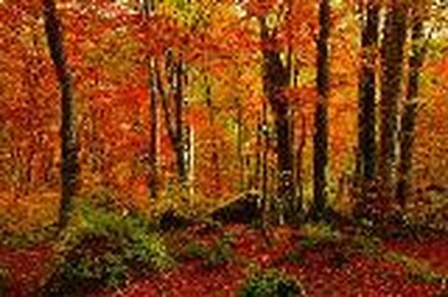 画像: <山旅会>『登山入門 黄葉のブナ林を巡る 白神山地十二湖と二ツ森 2日間』|クラブツーリズム