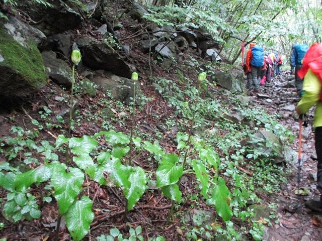 画像3: 【山旅会・登山ガイドこだわりツアー】岡田ガイドからの便り・茅ヶ岳ツアーにいってまいりました!