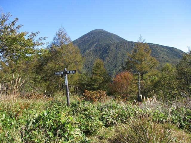 画像4: 【山旅会・登山ガイドこだわりツアー】岡田ガイドからの便り・八子ヶ峰ツアーの下見にいってまいりました!