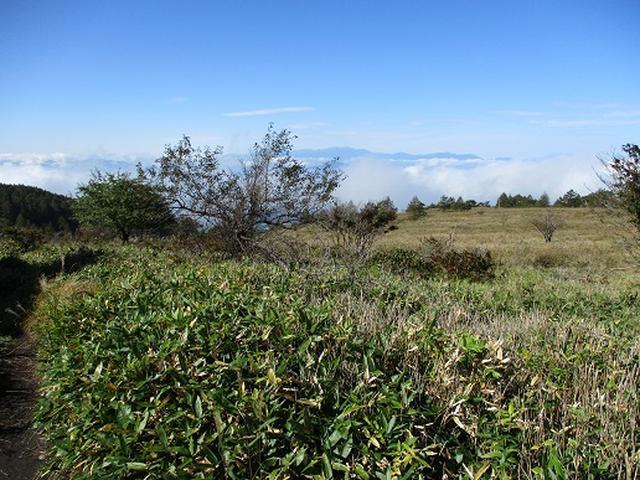 画像3: 【山旅会・登山ガイドこだわりツアー】岡田ガイドからの便り・八子ヶ峰ツアーの下見にいってまいりました!