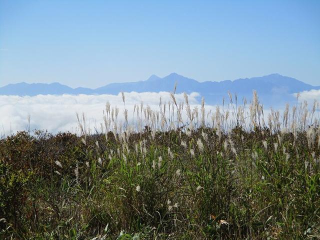 画像6: 【山旅会・登山ガイドこだわりツアー】岡田ガイドからの便り・八子ヶ峰ツアーの下見にいってまいりました!