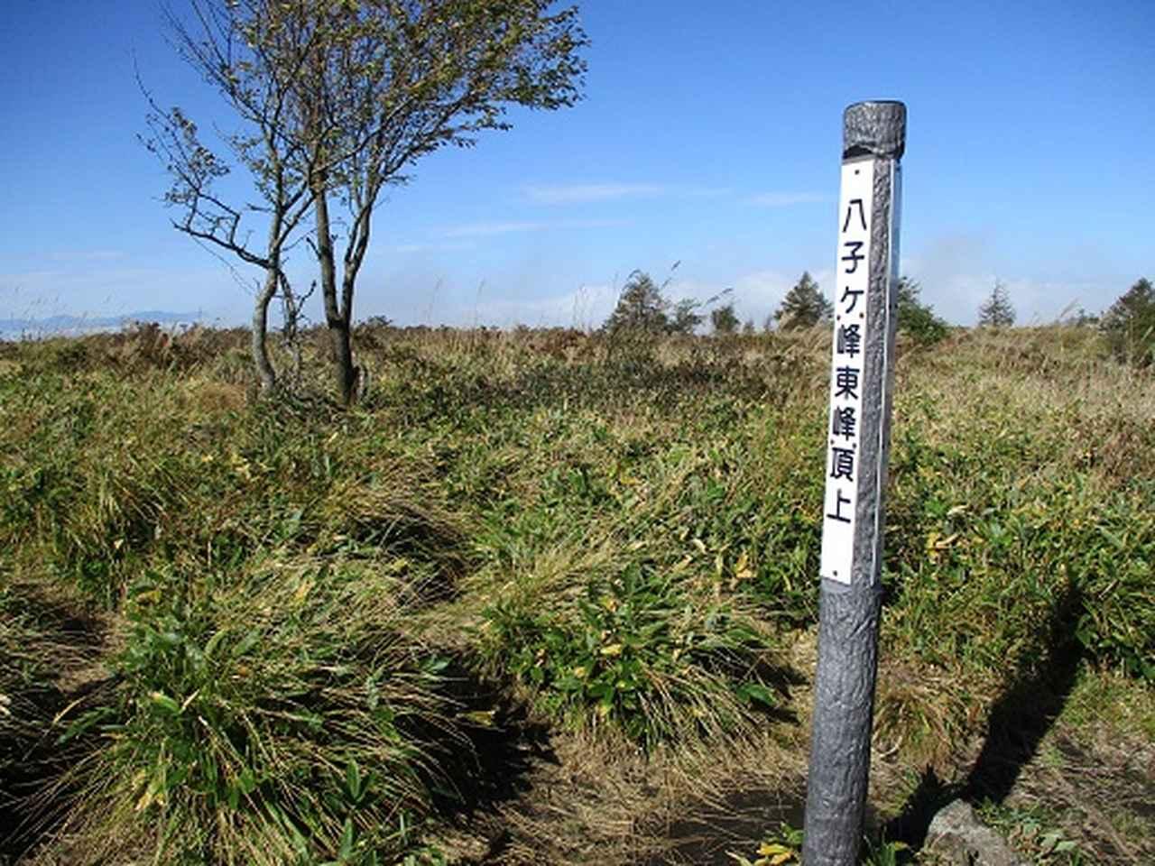 画像5: 【山旅会・登山ガイドこだわりツアー】岡田ガイドからの便り・八子ヶ峰ツアーの下見にいってまいりました!
