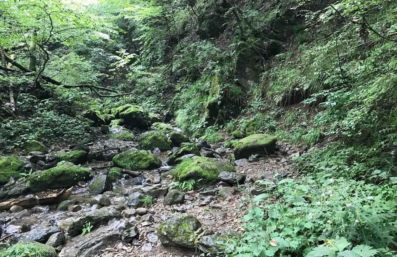 画像: 御岳山・ロックガーデン。苔と緑が生い茂って、水のせせらぎが心地良かったです。