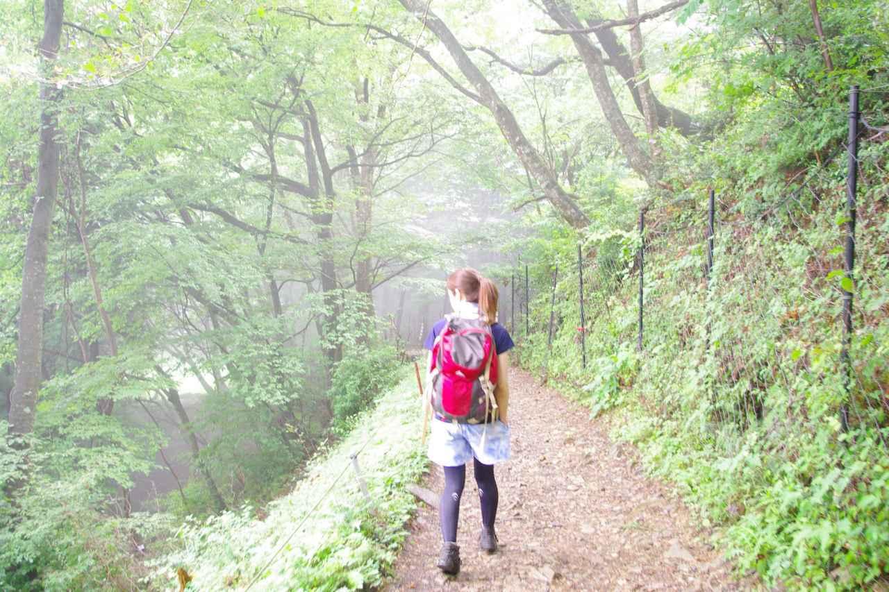 画像: しばらく歩く。(齋藤の心境:ここ落ちたらヤバい)