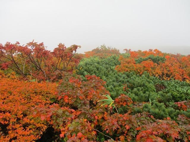 画像9: 【山旅会・登山ガイドこだわりツアー】岡田ガイドからの便り・安達太良山・栗駒山ツアーにいってまいりました!(その2)