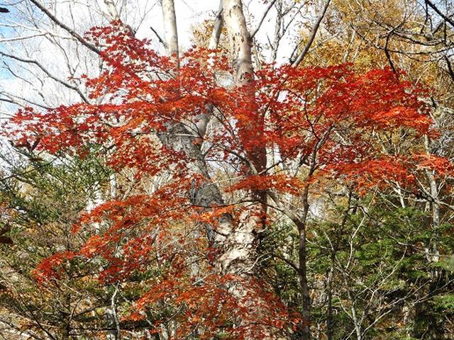 画像10: 【山旅会・登山ガイドこだわりツアー】岡田ガイドからの便り・夜叉神峠から高谷山ツアーの下見にいってまいりました!