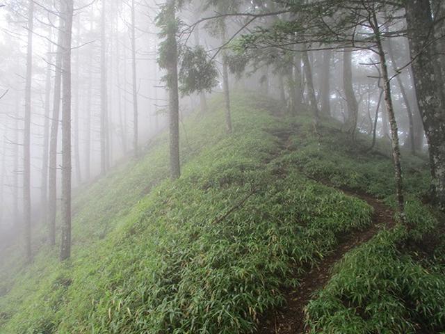 画像8: 【山旅会・登山ガイドこだわりツアー】岡田ガイドからの便り・夜叉神峠から高谷山ツアーの下見にいってまいりました!
