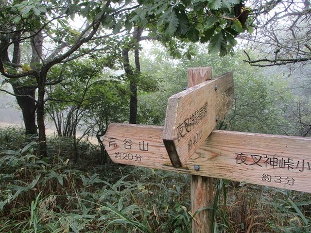 画像7: 【山旅会・登山ガイドこだわりツアー】岡田ガイドからの便り・夜叉神峠から高谷山ツアーの下見にいってまいりました!