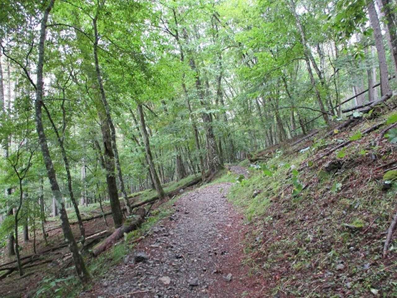 画像2: 【山旅会・登山ガイドこだわりツアー】岡田ガイドからの便り・夜叉神峠から高谷山ツアーの下見にいってまいりました!