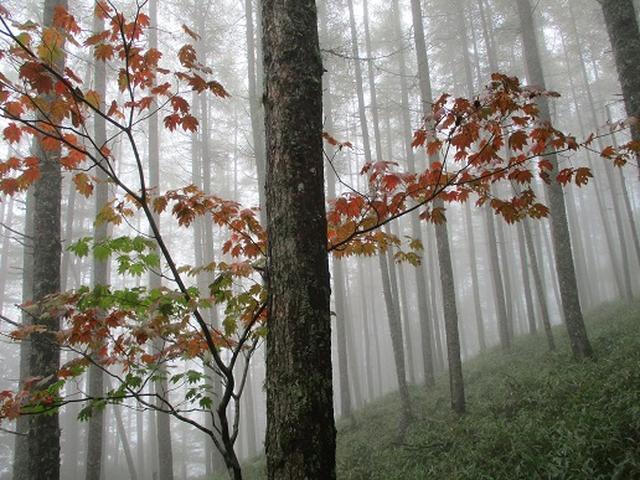 画像9: 【山旅会・登山ガイドこだわりツアー】岡田ガイドからの便り・夜叉神峠から高谷山ツアーの下見にいってまいりました!