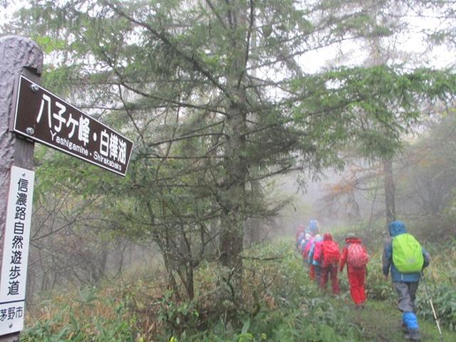 画像1: 【山旅会・登山ガイドこだわりツアー】添乗員からの便り・八子ヶ峰ツアーにいってまいりました!