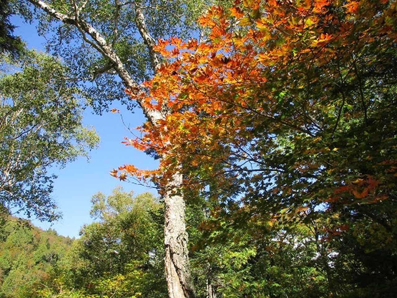 画像3: 【山旅会・登山ガイドこだわりツアー】岡田ガイドからの便り・尾瀬燧裏林道ツアーの下見にいってまいりました!
